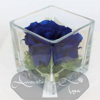 Idea regalo Rosa blu naturale stabilizzata per scrivania in cubo di vetro