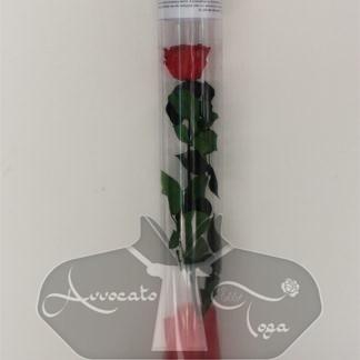 rosa rossa naturale con stelo stabilizzata