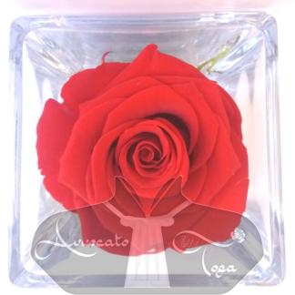 rosa-cubo-vestro-idea-regalo